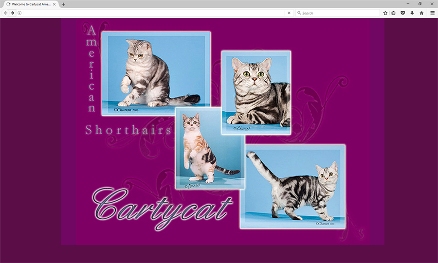 Cattery Website for CartyCat American Shorthairs