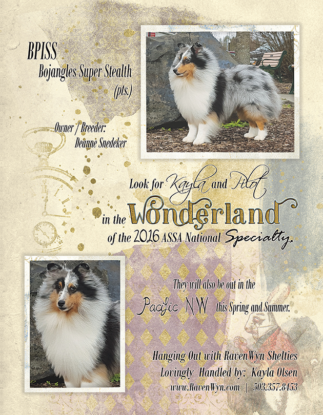 RavenWyn Shelties Ad PG2 - Sheltie Magazine