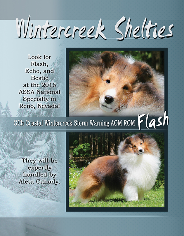 Wintercreek Shelties Advertisement PG1 - Sheltie Magazine